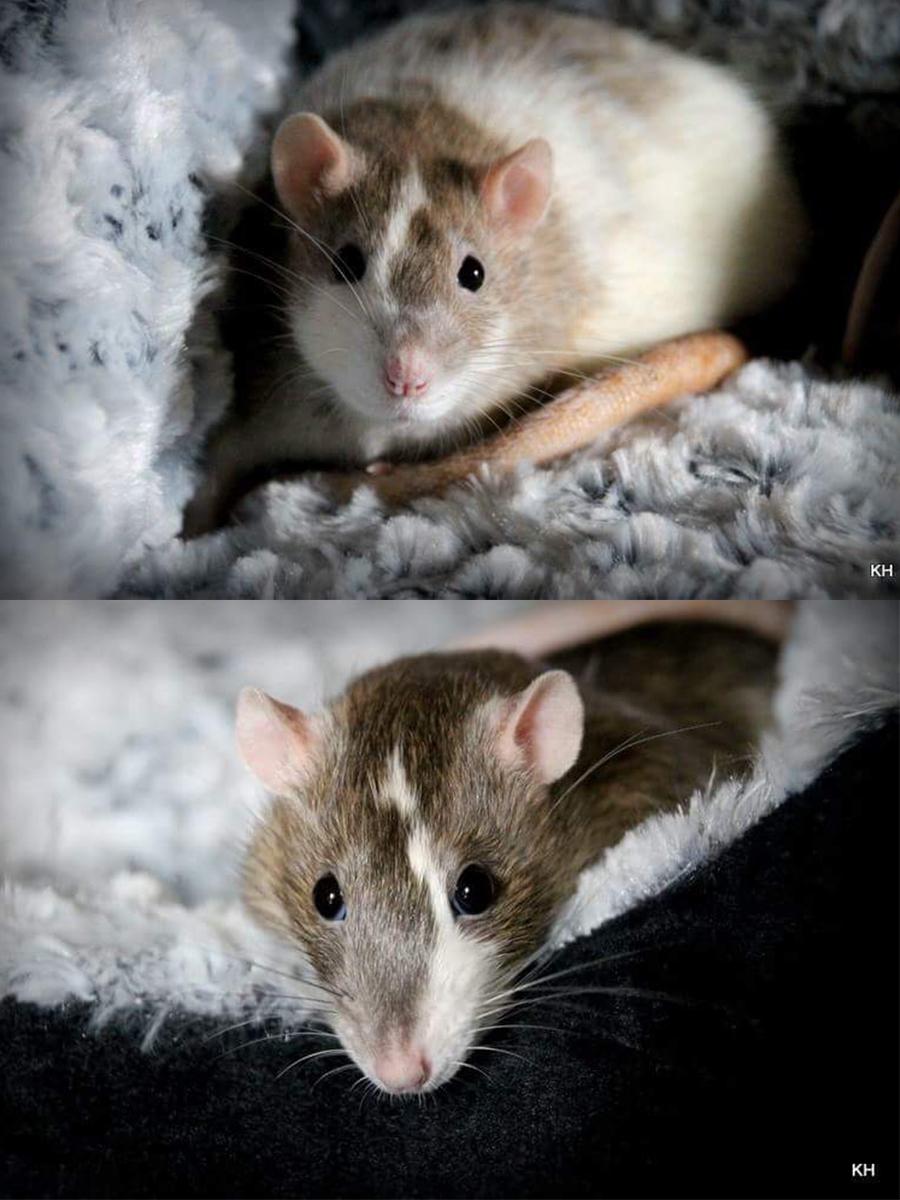 Stewie & Moe